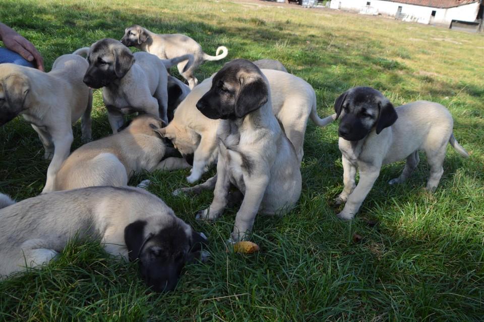 De pups.