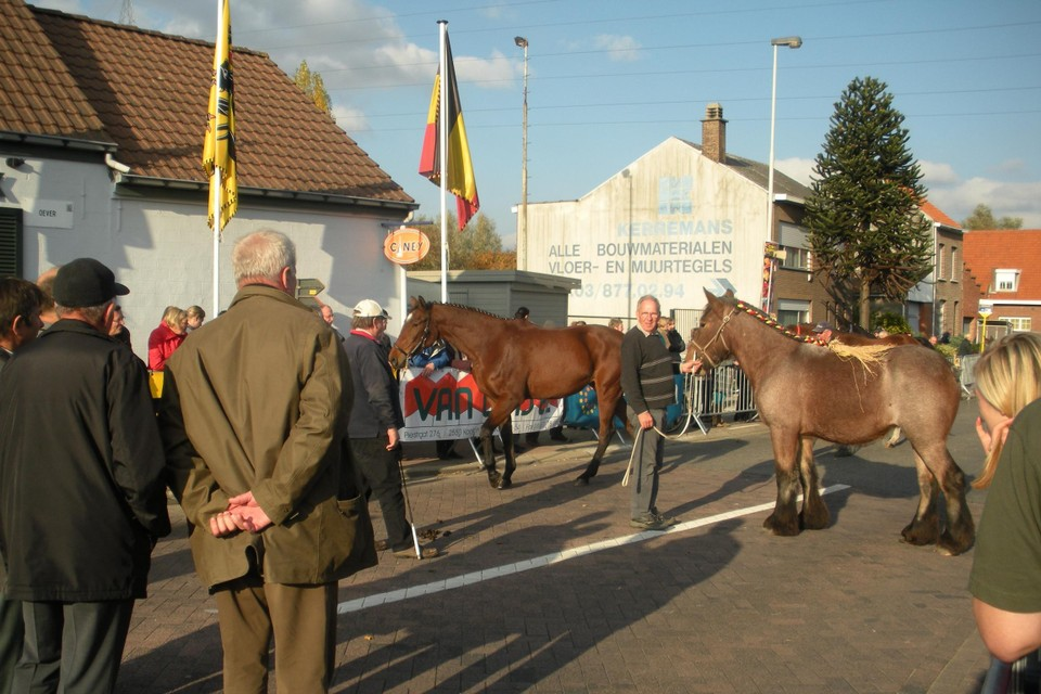 De paarden worden opnieuw gekeurd.