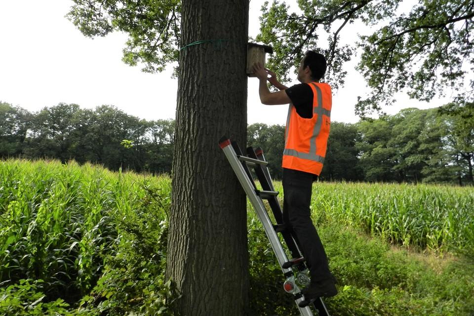 Veldmedewerker Toon Willems van het LIFE-project inspecteert een nestkast voor mezen.