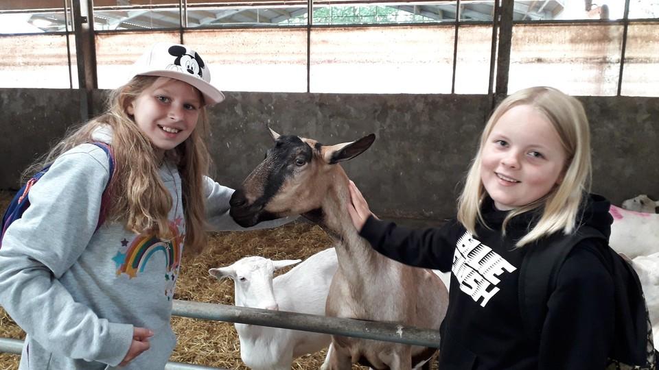De geiten laten zich makkelijk aaien door de kinderen.