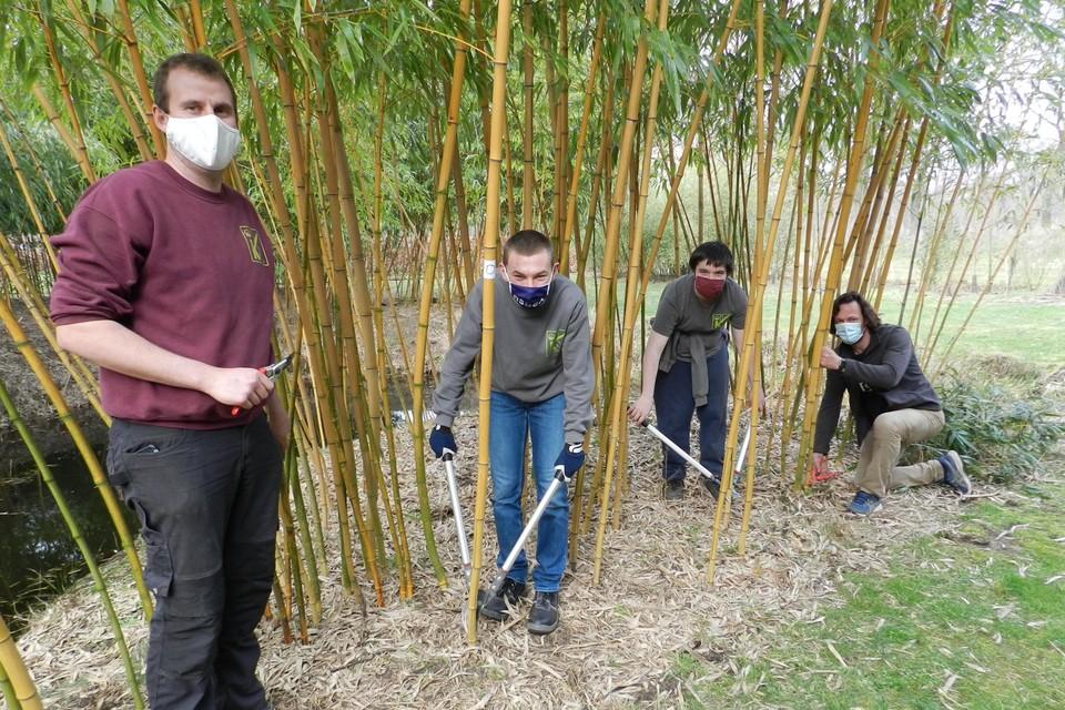 Leerkracht Robby Van Looveren, leerlingen Dimitri en Brent en plantentuinbeheerder Wout Oprins in het bamboebos.