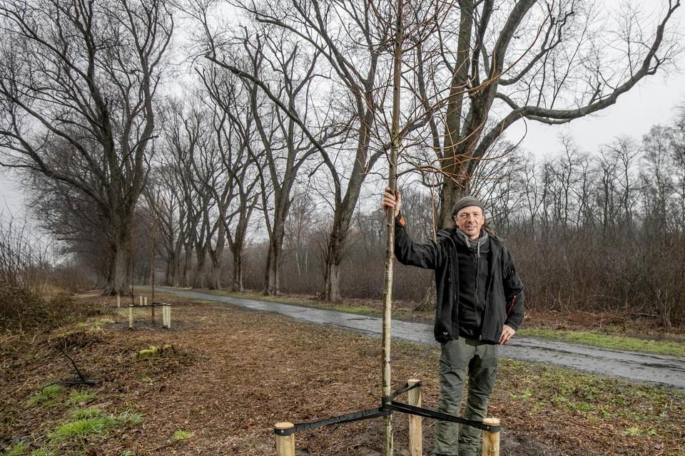 De Nijlense boomverzorger Wim Mertens staat bij een van de nieuw aangeplante bomen.