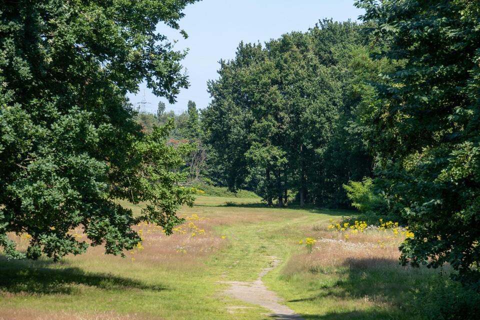 De Bremweide: vroeger een autokerkhof, vandaag een groen eiland.
