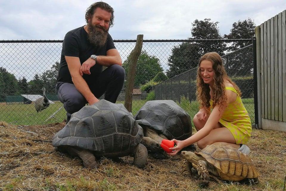 Christophe en Flo Eysermans voeden de twee grootste soorten in hun collectie, de zwarte Seychellenreuzenschildpadden en de bruine Afrikaanse sporenschildpad.
