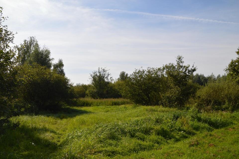 Het gebied waar het zomerklokje groeit, maar waar jammer genoeg ook oud bouwstort onder de grond zit.