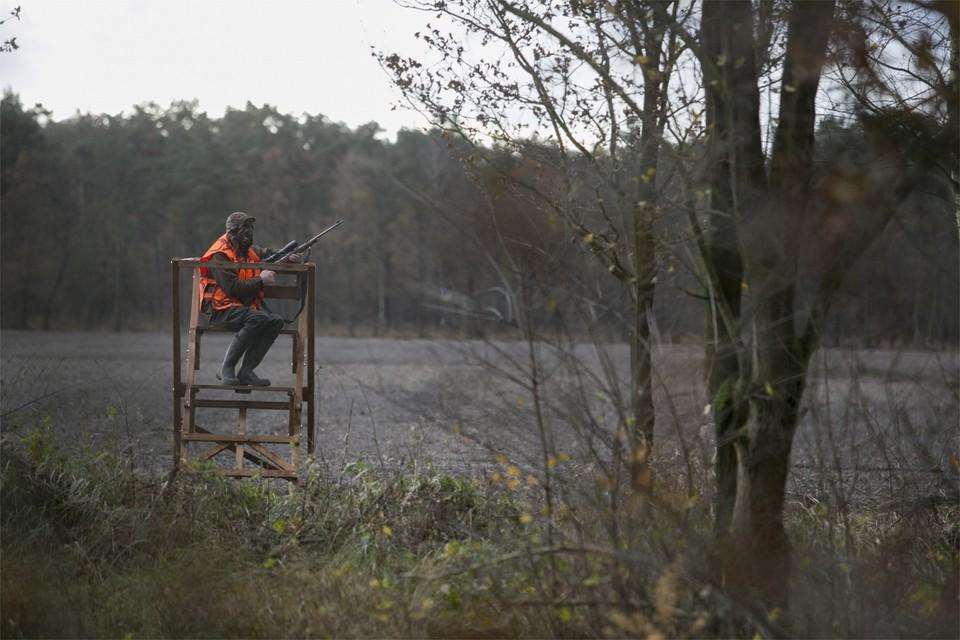 Een foto van een drukjacht in Mol. Ondanks het jachtverbod mochten jagers wel op everzwijnen blijven jagen zodat de populatie onder controle blijft.