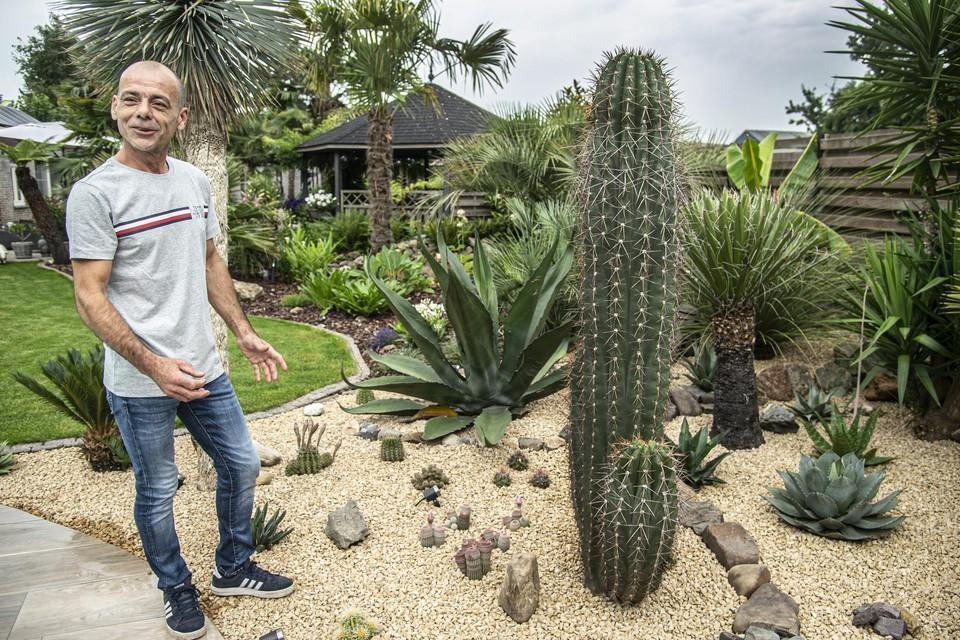 Ronny Gypen bij een uit de kluiten gewassen cactus.