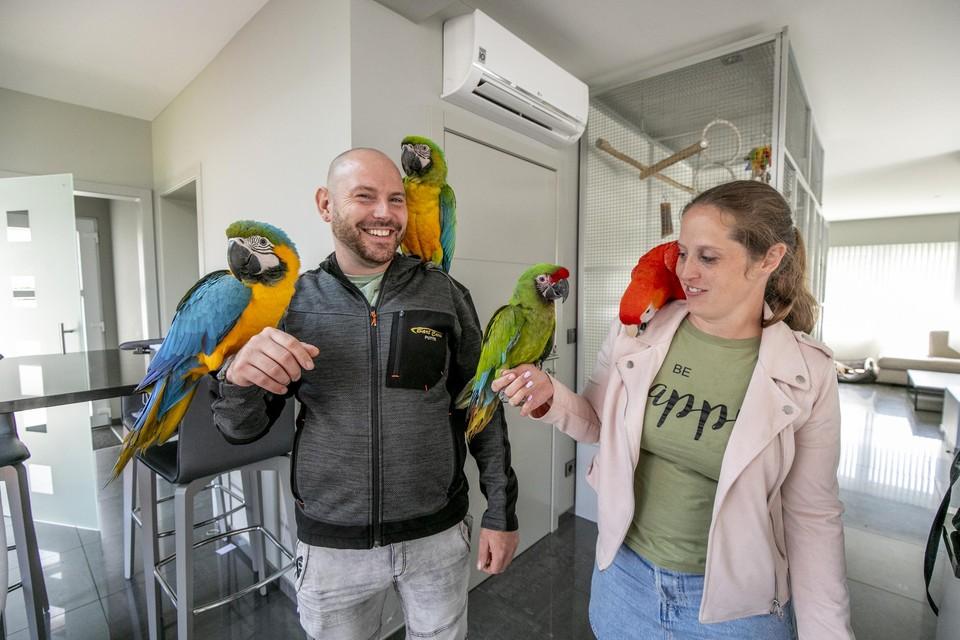 De vier ara's van Bart Jenard en Naomi Schallenbergh zijn een deel van het gezin. Ze mogen zowel binnen als buiten geregeld los vliegen.