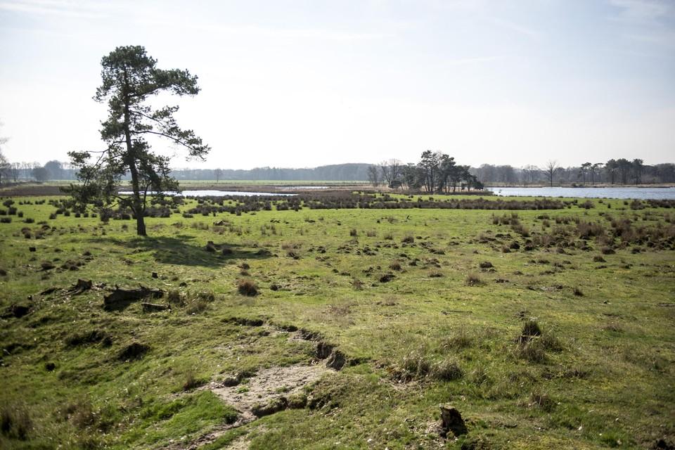 In Turnhout zou het Vennengebied behoren tot het toekomstige Nationaal Park.