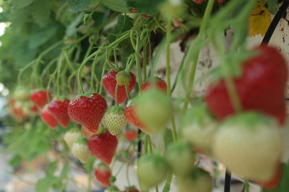 Houtvezel kan gebruikt worden als basis voor een duurzamere potgrond.
