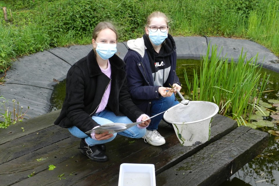 Leerlingen analyseren de planten en dieren in de vijver.