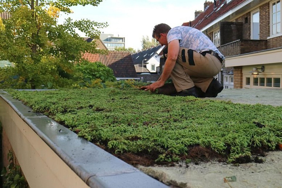 Onder meer groendaken moeten het in de stad doen afkoelen.