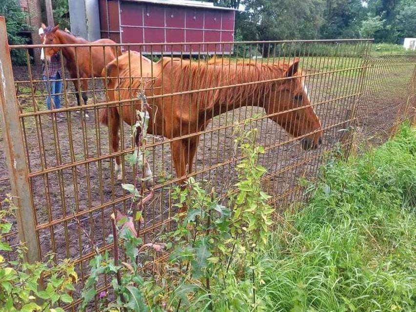 Veel van de paarden zijn mager.