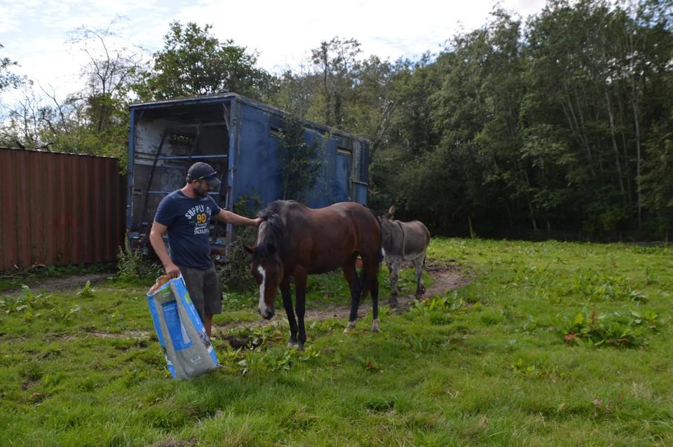 Bij de ezels staat ook één paard, Nina, die bevriend is met ezel Mario.