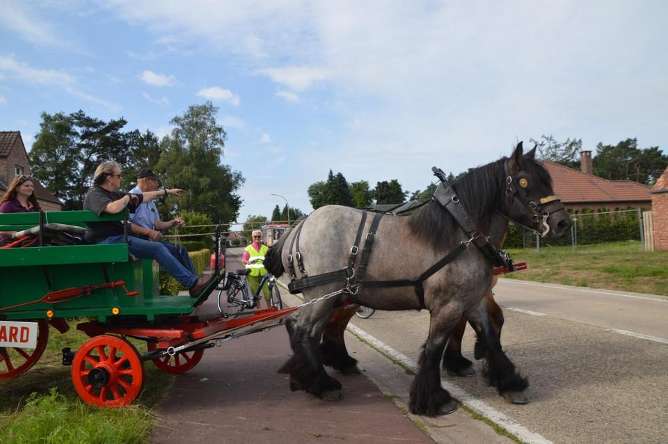 Het fier Belgisch trekpaard.