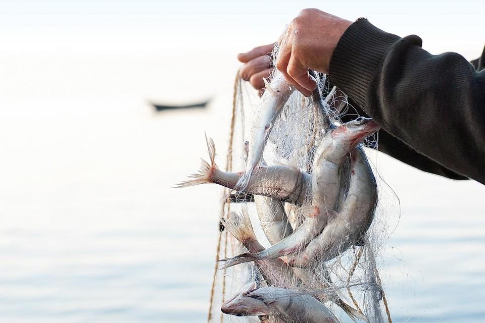 Hoe verser, hoe lekkerder de vis.