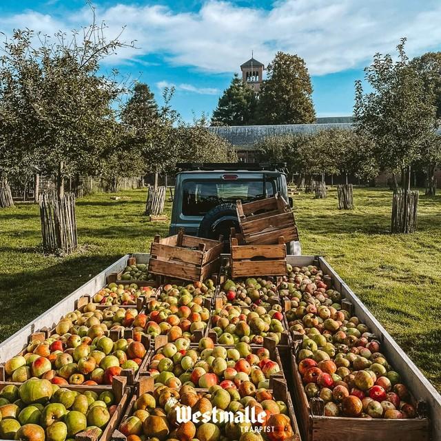 Westmalle Trappist postte zelf deze smakelijke foto van de oogst op Facebook. Blozende vitamines uit Westmalle.