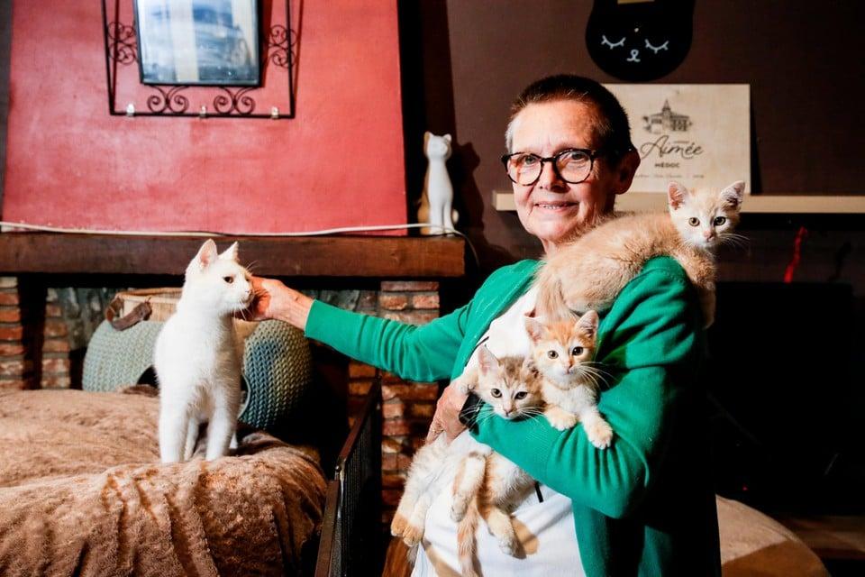 Ingrid Voncken van Katten-T-Huis in Ekeren met enkele kittens.