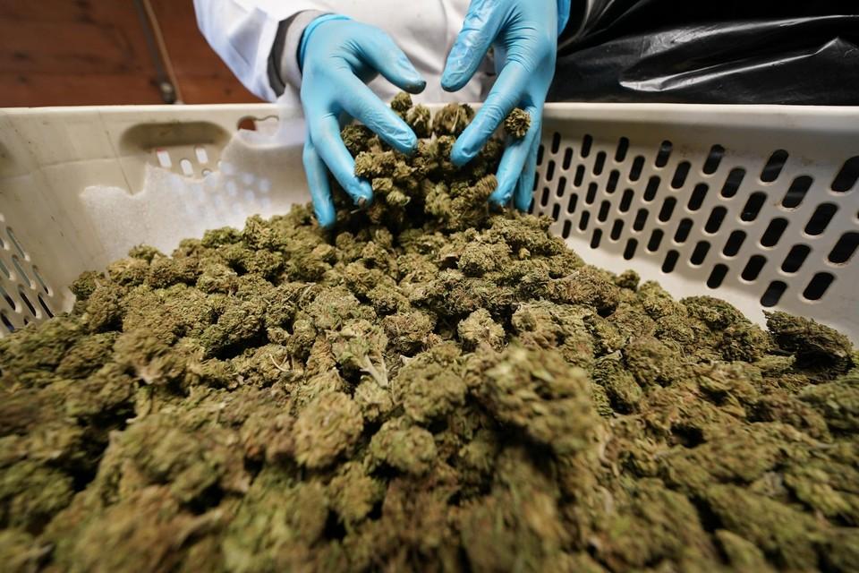 De politie vond alles samen meer dan drie kilogram cannabis.