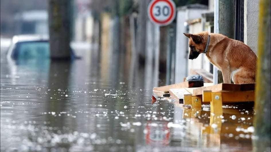 Er duiken zielige foto's op uit de overstroomde gebieden.
