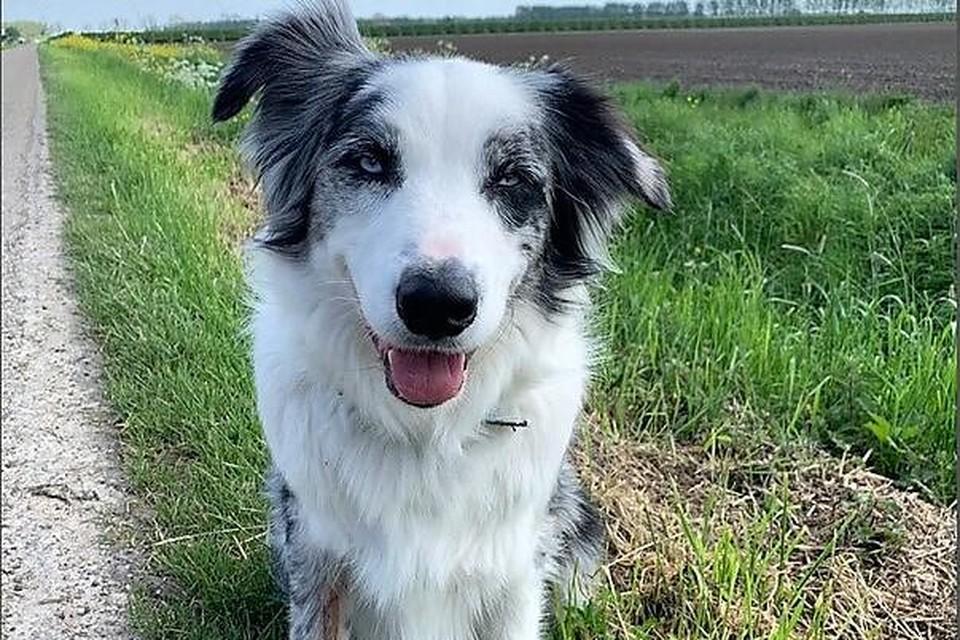 Katrien Descheemaecker waarschuwt andere hondenbaasjes, nadat haar hond de roze korrels had gegeten.