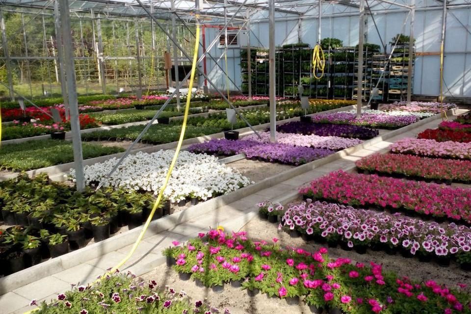 De tuinbouwafdeling kweekte zo'n 20.000 bloemen op.