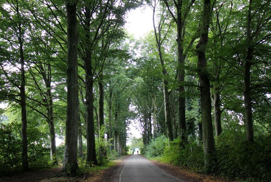 Een beheersplan moet over de gezondheid van de bomen waken.