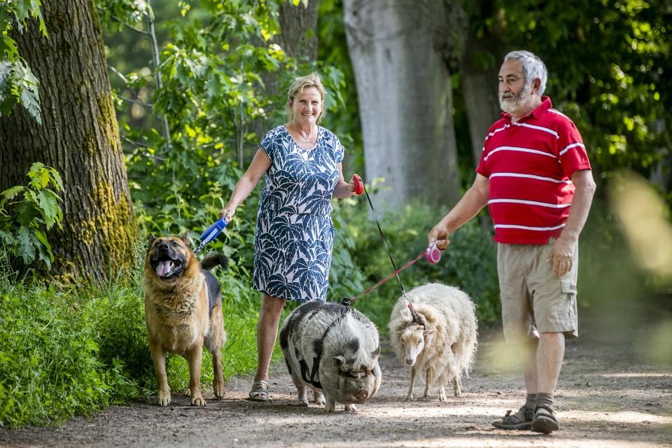 Jef en Maria Leirs met Knor het varken, Liesje het schaap en Dex de Duitse herder in de Trappistenbossen.