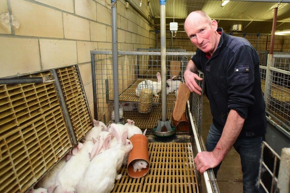 De vleeskonijnen van Luc Buyens zitten al op plastic matten in een parksysteem, met buizen en ander konijnenspeelgoed.