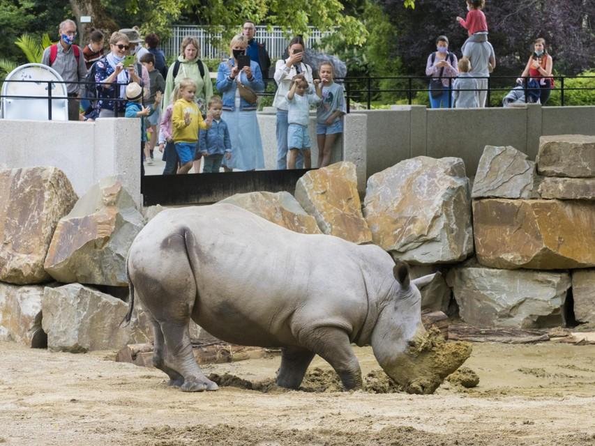 Zand- en modderbaden zijn een genot voor neushoorns.