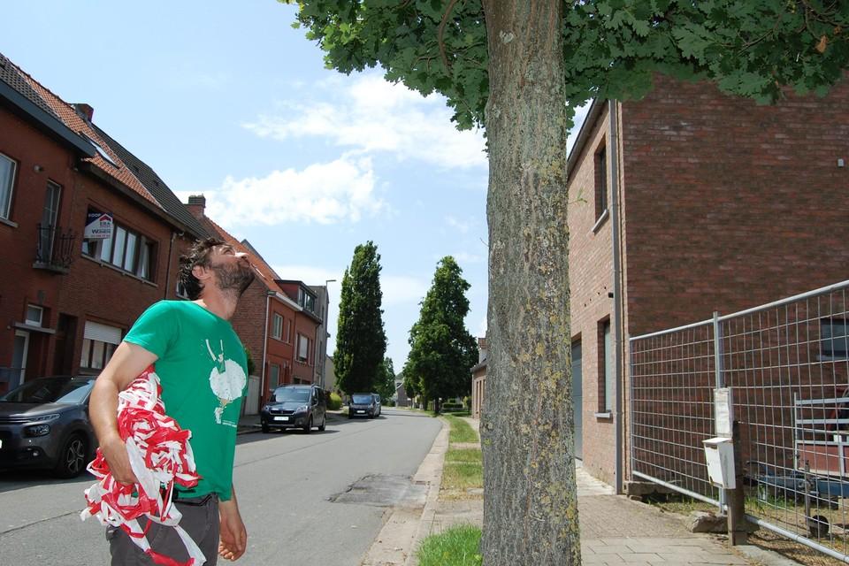 Wies kijkt elke boom na en markeert ze met een lintje.