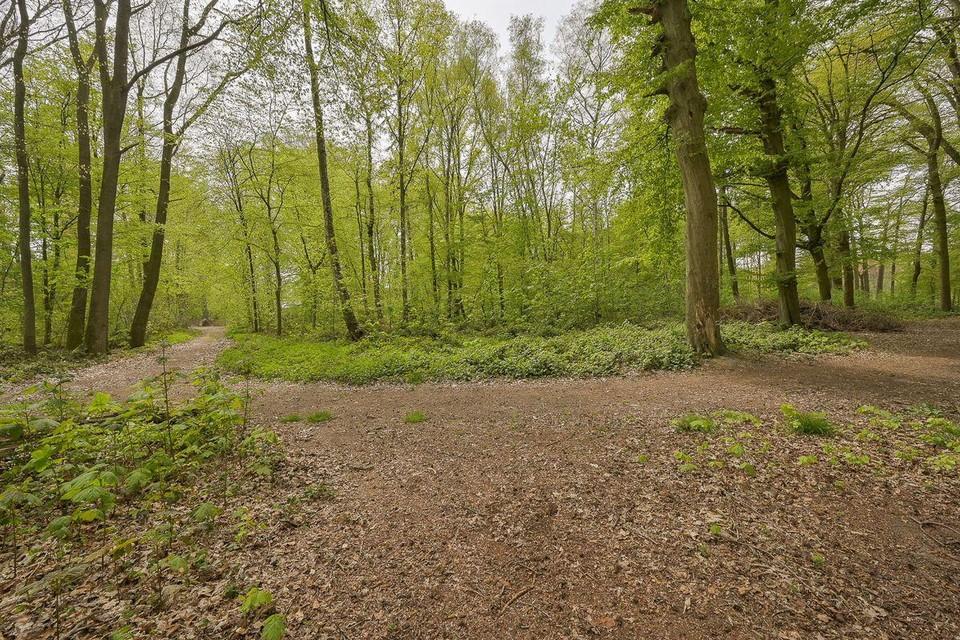 Een deel van Montens Bos staat te koop.