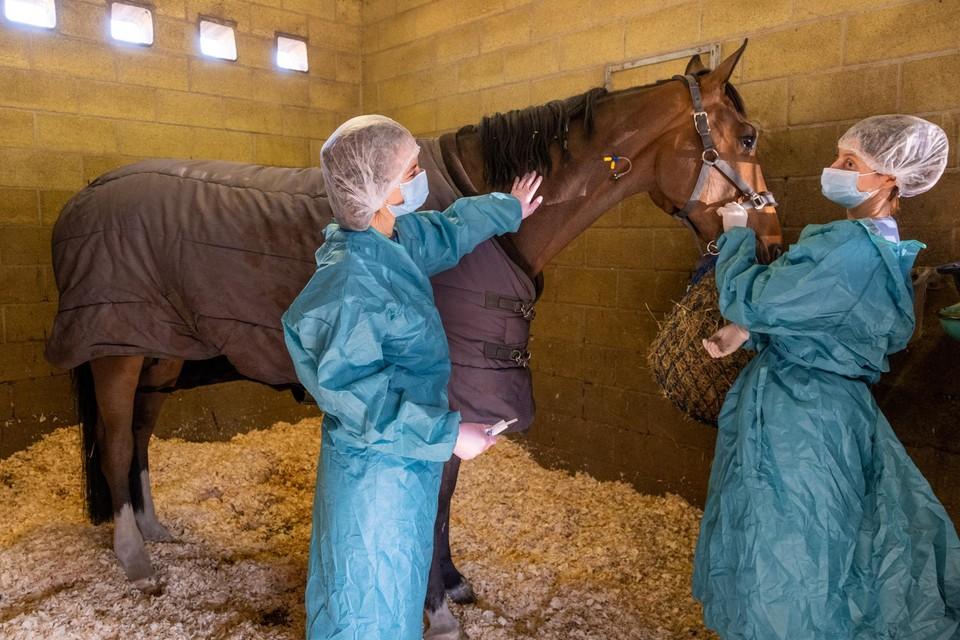De quarantaine-afdeling in dierenkliniek De Bosdreef, waar al één paard behandeld wordt. De dierenartsen dragen er beschermende kledij.