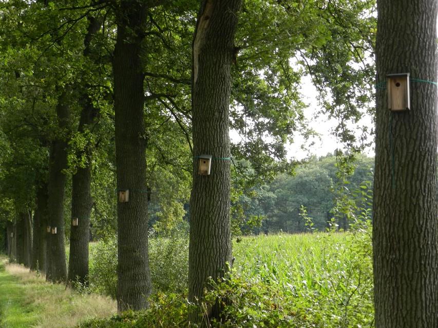 Een bomenrij met mezenkastjes in Wortel-Kolonie.