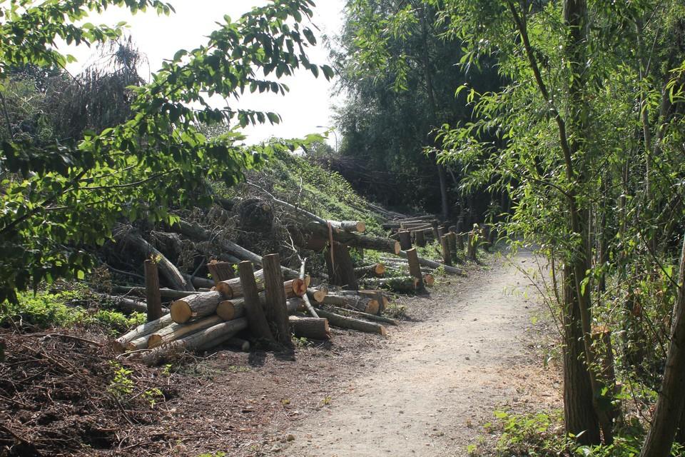 Vorige week werden in het gebied meer dan honderd bomen gekapt.