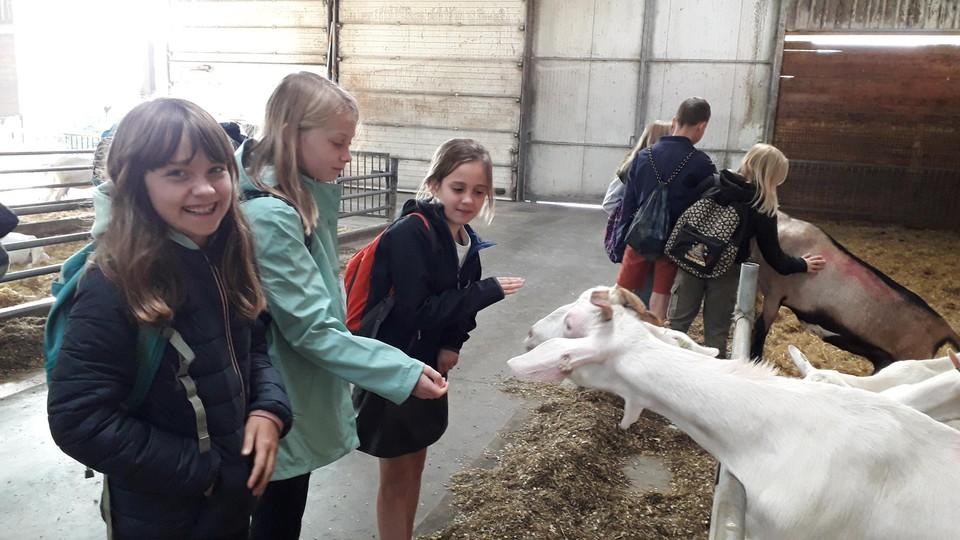 Vijfdejaars Jutta, Aube en Lynn van GBS De Sleutelbloem vonden de geiten het leukste onderdeel van de plattelandsklassen.