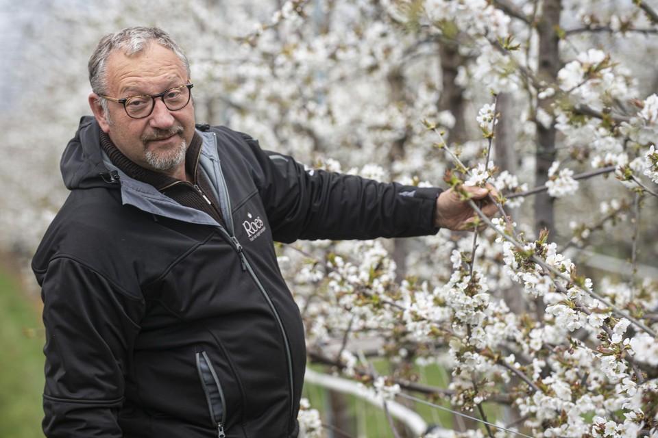 Gunter Roes toont de bloesem die niet kan worden beschermd tegen de polaire wind die bij de aprilse grillen hoort.
