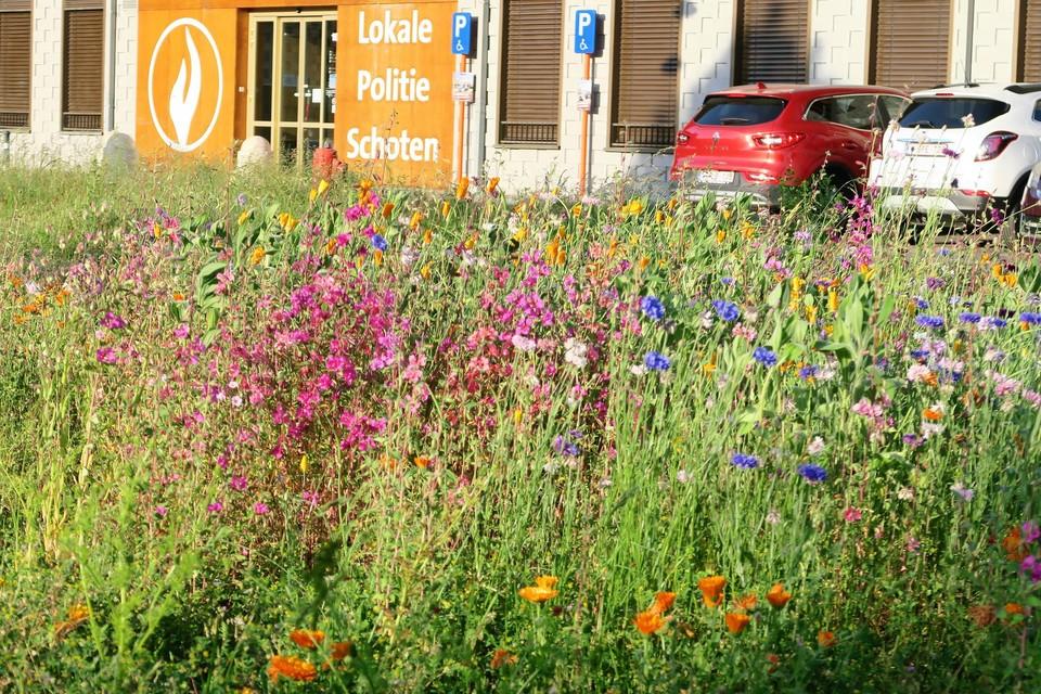 De biodiverse bloemenweide zorgt eindelijk voor kleur op het wat monotone Gasketelplein.