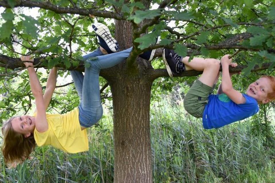 In dertien gemeentes kunnen gezinnen een gratis boom bestellen.