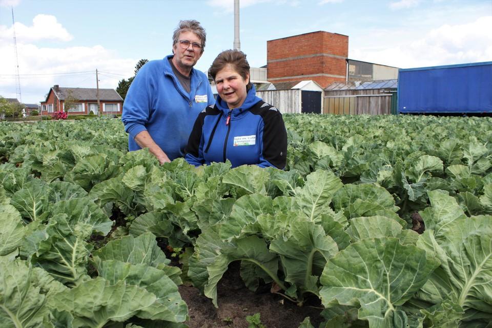 Raf Storms en Linda Van Dessel tussen de bloemkolen.