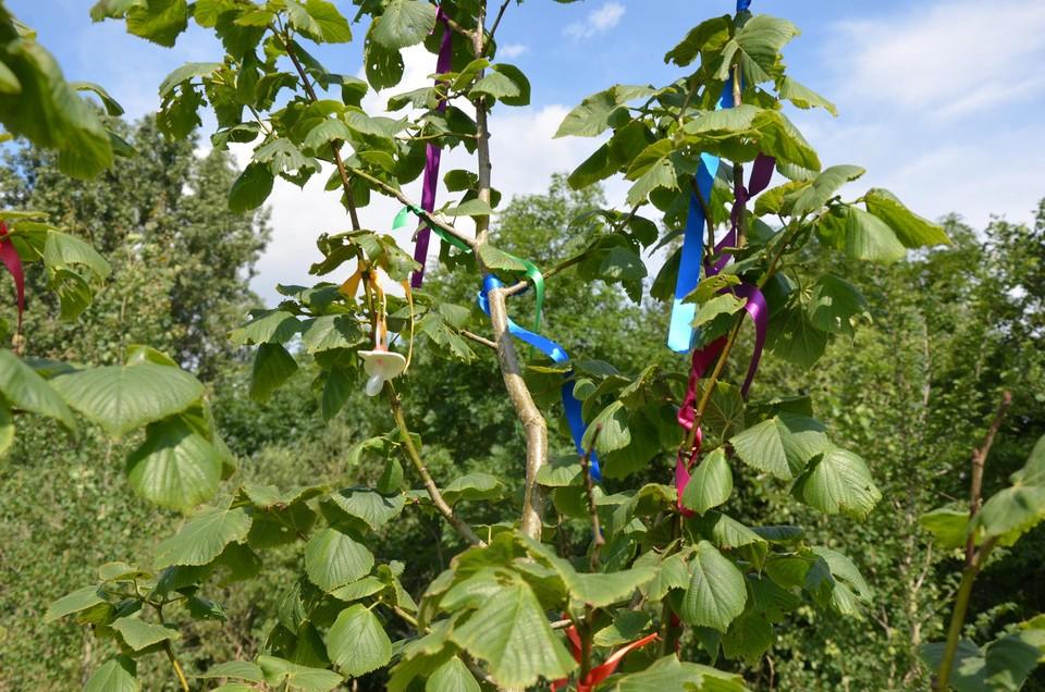 Je herkent de boom aan de kleurrijke lintjes die erin hangen.
