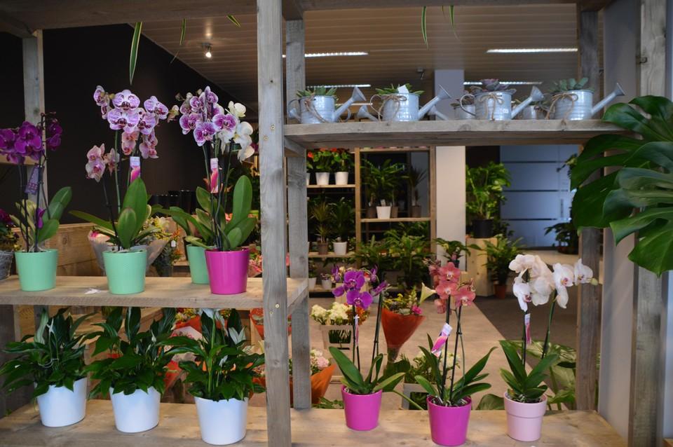 De orchideeën.
