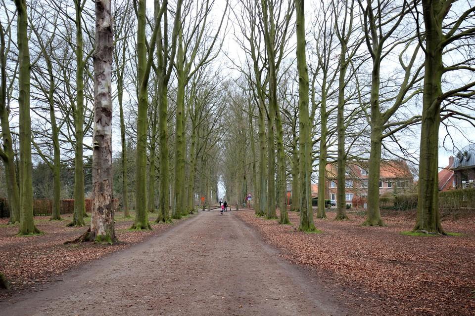 De bomendreef in het deel van de familie Moretus, achter het poortje, wordt mogelijk vervangen. De bomen vooraan, van de familie Reynders, blijven behouden.