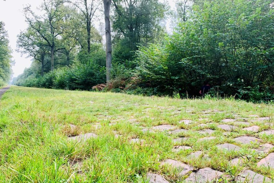 Veel gras, weinig kasseien in het Bos van Wallers.