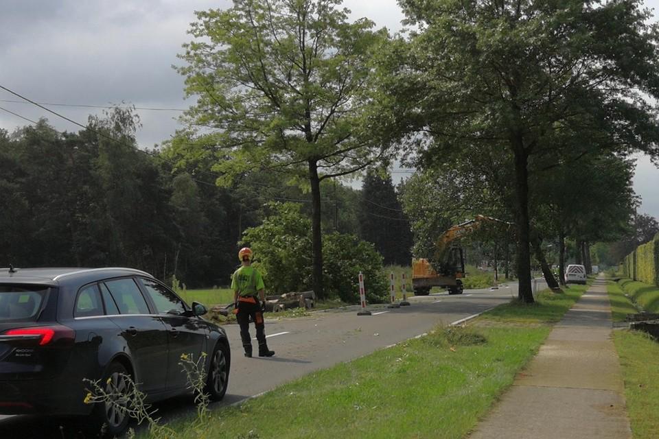 Met de grote middelen halen arbeiders momenteel heel wat bomen neer die de fietspaden en ondergrondse leidingen beschadigen.