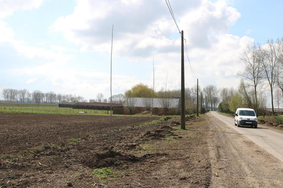 De cannabisplantage zat verstopt in één van deze loodsen in de polder in Vrasene.