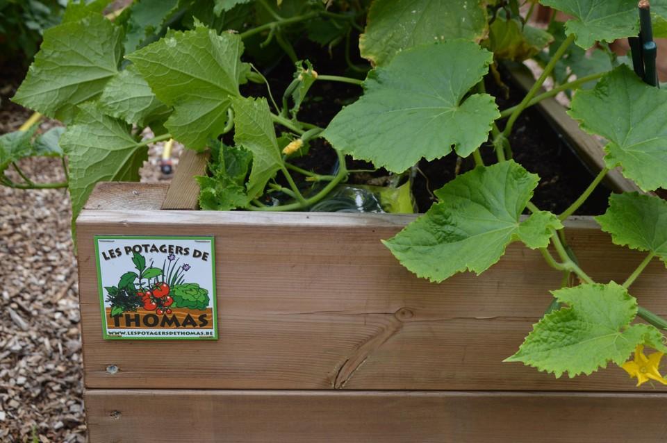 De moestuinbakken van Les potagers de Thomas.