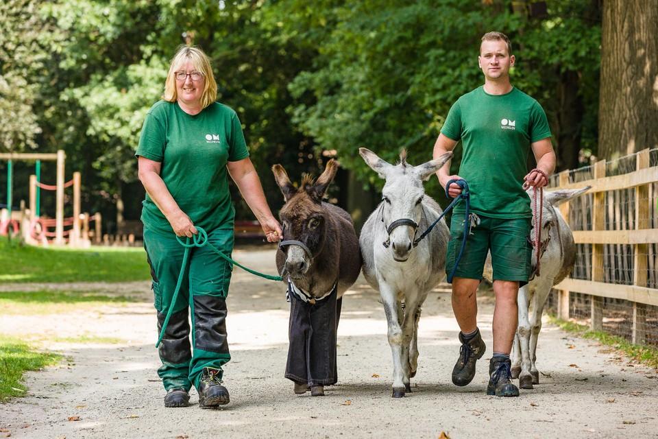 Nettie en Lennert gaan geregeld op stap met de ezels.
