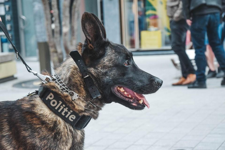 Politiehond Barry werd amper zes jaar oud.