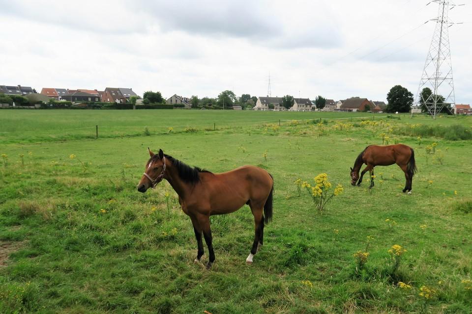Het uitzicht van de omwonenden vandaag. Grazende paardjes op een immense weide met in het midden wel een hoogspanningsmast, die het beeld net niet perfect maakt. Die mast blijft overigens staan.